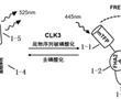 一种活细胞内检测CLK3激酶活性的生物探针及其应用的制作方法