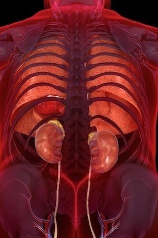 【機能解剖学】股関節は寛骨と大腿骨から ...